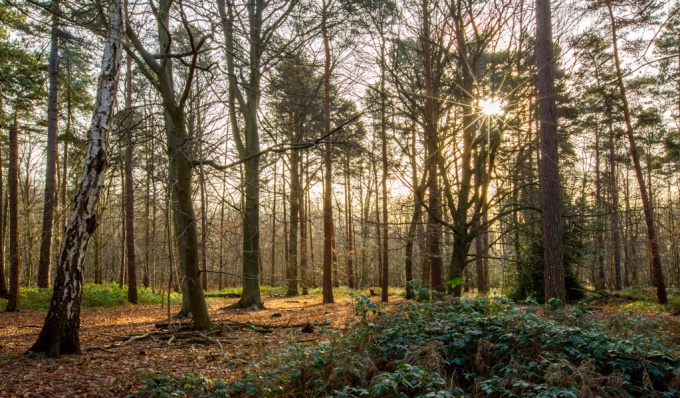 Thorndon Forest-4