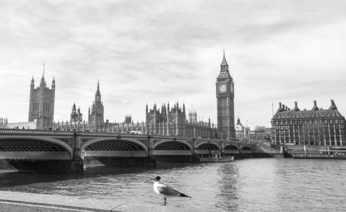 Housesof Parliamentandbird