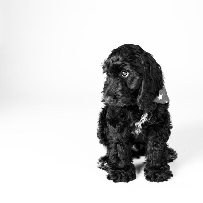 Finley Puppy Shoot